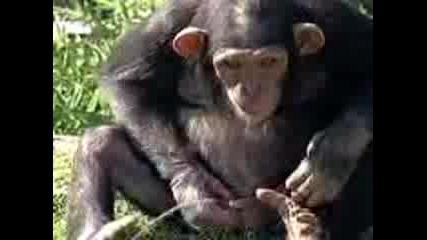 Monkey.3gp