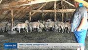 Извънредни срещи с животновъдите в Хасковско