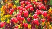 Antonio Vivaldi - Spring - Пролет