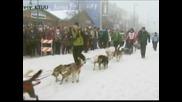 Започна състезанието с кучешки впрягове в Аляска