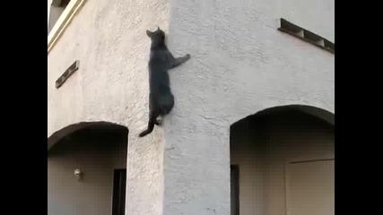 Тази котка е егати лудия алпинист