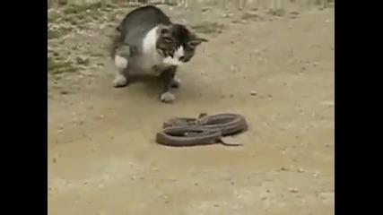 котка убива змия