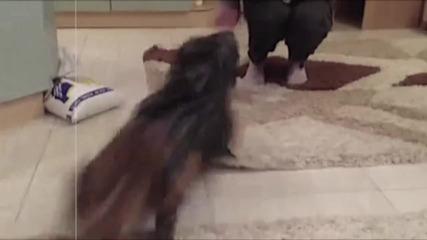Какво става ако дадеш начален старт на котка в торба - много смях