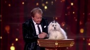 Говорещото куче мис Уенди е отново на сцената - Britain's Got Talent 2015