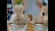малки зайчета