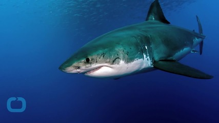 'Sharks Don't Like to Eat People': Attack Statistics Contradict Untested Theories
