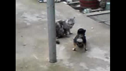 куче и котка след няколко месеца