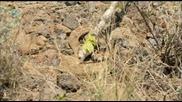 Man vs. Wild - Texas - Rattlesnake Encounter