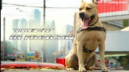 Tret in Moscow (parkour Dog From Ukraine in Russia`)