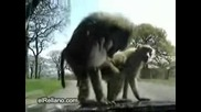 Маймунки се катерят по двъжеща се кола