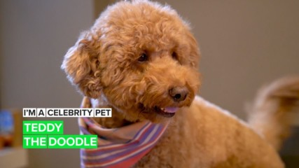 "I'm a Celebrity Pet! Teddy is officially ""most huggable"" on Instagram"