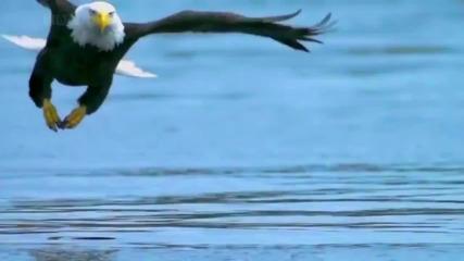 Matt Sorum's Fierce Joy - For the Wild Ones (official Music Video)