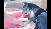 Куче Си Играе С Вибратор