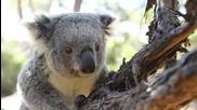 Австралия - Различната земя