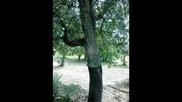 Красива природа - музика Kitaro