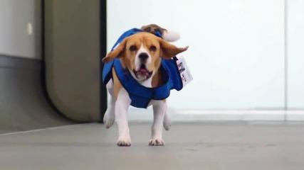 Куче работи на летището