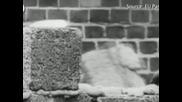Германия отбелязва 23 години от падането на Берлинската стена