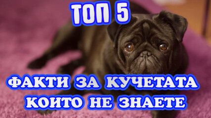 Топ 5 Факти за кучетата които не знаете
