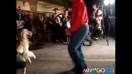 Куче танцува салса