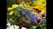 De mil colores