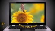 Песента на птиците ... ...