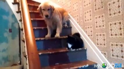 Котките са такива зaдници