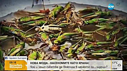 НОВА МОДА: Насекомите като храна