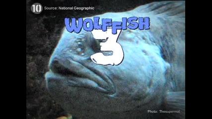 Топ 10 Странни морски същества