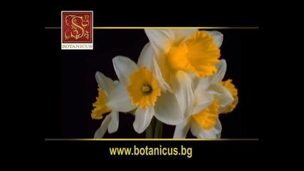 Botanicus Bulgaria 1