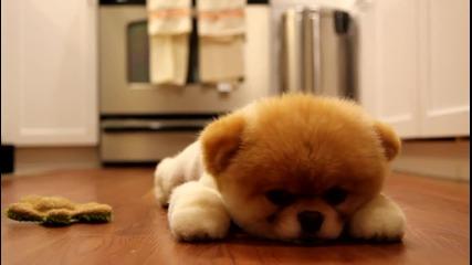 Най-сладкото Куче На Света [boo]