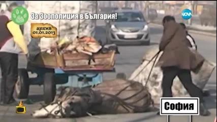 За зоополиция в България - Господари на ефира (25.03.2015)