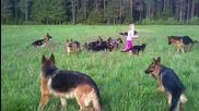 Малко Момиченце играе с 14 Немски Овчарки