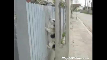 Куче - нинджа