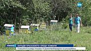 Масова смърт на пчели в района на Димитровград