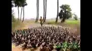 2000 Сладки Патенца Маршируват :)
