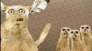 Луди котки пеят o - zone Dragostea Din Tei