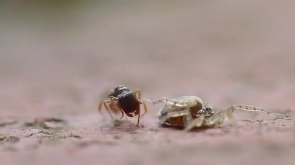 Ant vs Spider with Surprise Ending