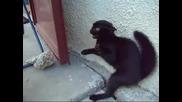 Котката - Дявол