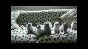 Сладки Котенца Правят Движения В Такт С Музиката !