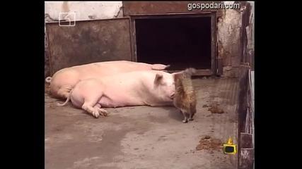 Животинска любов