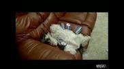 куче спи обградено в бирени котийки