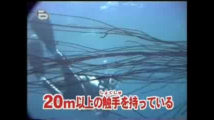 Рекорд на Гинес - голяма медуза
