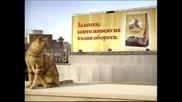 Реклама на Friskies