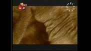 Кис 13 - Деси Слава - Обичам те(tv version) - By Planetcho