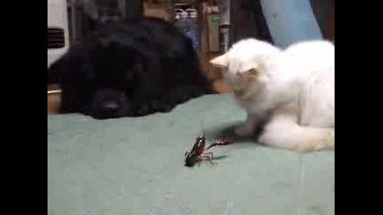 Котка И Рак - Много Смях