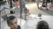 Кукла на конци в Поморие