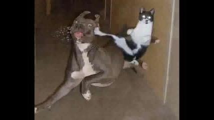 Котки - Снимки