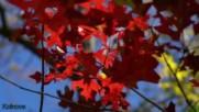 Магията на есента авторски