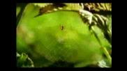 The Ladybug Minuscule