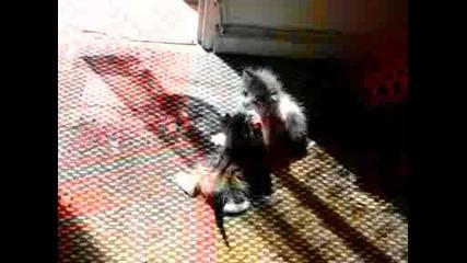 Котета - бебета се боричкат